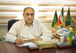 سالیانه ۲۵۰ هزار تن خرما از نخلستان های سیستان و بلوچستان برداشت می شود
