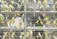 آغاز فصل مهاجرت پرندگان در سیستان و بلوچستان/ تمهیدات لازم برای جلوگیری از بیماری آنفولانزای پرندگان در نظر گرفته شده است