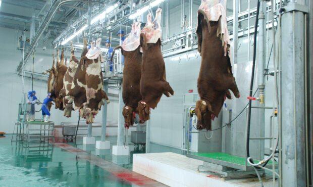 انجام بیش از ۸ هزار عملیات نظارت بهداشتی بر روند تولید و توزیع فرآورده های خام دامی/ کشف ۱۹۰ کیلوگرم گوشت و ۹ هزار قطعه مرغ غیر بهداشتی در استان